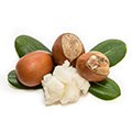 image of shea butter